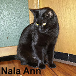 Nala Ann was adopted from her foster home on Saturday, October 31, 2015.