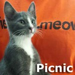 Picnic was adopted from the Cat House and Adoption Center on Saturday, June 27th, 2015.