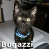 Bugazzi was adopted from his foster home on Saturday, November 7th, 2015.