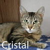 Cristal and J. Arthur were adopted together from the Cat House and Adoption Center on Saturday, October 3, 2015.<br /> <br /> Cristal<br /> <br /> Don't overlook the little things in life.<br /> <br /> Cristal is young and vibrant, sweet and loving, and excited to see what lies ahead for her next in life. She is appreciative for any love and affection that she is given and has a happy attitude.