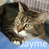 Jayme was adopted from the Cat House and Adoption Center on Wednesday, October 7, 2015<br /> <br /> Jayme<br /> <br /> Just happy to be safe.<br /> <br /> Jayme was one of the last that got transferred to us, while we weren't sure she'd be any happier with us ... she proved us wrong, immediately seeking all the hands-on attention she could get.