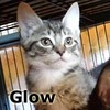 Glow was adopted from her foster home at South Bay Animal Hospital on Friday, September 4th, 2015.