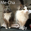Me-Cha and Gilly (Mother & Daughter) were adopted from the Cat House and Adoption Center on Saturday, August 29, 2015.<br /> <br /> Gilly and Me-Cha<br /> <br /> Daughter and mother.<br /> <br /> Adopted as a trio, came back as a duo and declawed. These two beautiful girls are just as beautiful inside as they are on the outside. These two ladies would flourish in an adult home without competition and being loved equally.