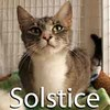 Solstice was adopted from the Cat House and Adoption Center on Saturday, July 11, 2015.