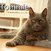 Tommie was adopted from the Cat House and Adoption Center on Thursday, August 20, 2015.
