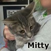 Mit, Mitty, and Mittens (sisters and brother) were adopted together from the Cat House and Adoption Center on Saturday, September 5th, 2015.