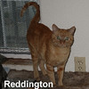 Reddington was adopted from the Cat House and Adoption Center on Sunday, September 27, 2015