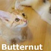 Butternut and Pattypan (brother and sister) were adopted together from their foster home on Sunday, July 26, 2015.