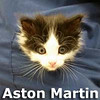 Aston Martin was adopted from his foster home on Saturday, November 7th, 2015.
