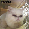 Freeta was adopted from the Cat House and Adoption Center on Thursday, July 23, 2015.