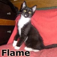 Flame and Votive were adopted from their foster home on Saturday, October 31, 2015.<br /> <br /> Votive and Flame<br /> Light up your life with these bright little beauties. Lantern and his sisters will warm your heart and home with their shining personalities.<br /> <br /> Flame<br /> Her burning desire is a forever home full love, and her favorite toys! Flame is easily entertained and her passion for play will ignite your soul.
