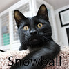 Merlin and Snowball were adopted together from the Cat House and Adoption Center on Saturday, September 19, 2015.<br /> <br /> Snowball<br /> <br /> Not for tossing.<br /> <br /> Being thrown once - probably from a car due to his injuries, is one time too many for sweet Snowball. He is handsome and charming and bound to melt your heart.