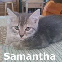 Samantha and Shelly were adopted together from their foster home at Hawks Prairie Veterinary Hospital on Friday, July 10th, 2015.