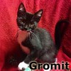 Gromit was adopted from the Cat House and Adoption Center on Saturday, October 24, 2015.<br /> <br /> Gromit<br /> <br /> Cheese!<br /> <br /> A master of invention, Gromit is on the lookout for ways to thwart any villainous activities. He is a good pal to have around.