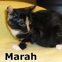 Marah was adopted from the Cat House and Adoption Center on Saturday, December 5, 2015.