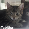 Tabitha was adopted from the Cat House and Adoption Center on Saturday, February 20, 2016.