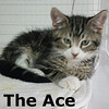 The Ace was adopted from the Cat House and Adoption Center on Saturday, January 9, 2016.