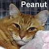 Snoopy and Peanut were adopted from the Cat House and Adoption Center on Saturday, April 30, 2016.<br /> <br /> Snoopy and Peanut<br /> <br /> Good grief.<br /> <br /> The perfect home was taken with the passing of their former owner. Sad and not sure what lies ahead for them...they are making the best of the situation. Living a quiet life is what they had been used to and would welcome this again. Don't you live a quiet life and yet wish there was someone to listen to you without judgement?