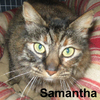Samantha was adopted from the Cat House and Adoption Center on Saturday, December 5, 2015. <br /> <br /> Samantha<br /> <br /> Owners dump special girl.<br /> <br /> Tragedy strikes many cats on a daily basis, although it is so tragic every time you see it. No doubt Samantha will be much happier in a new home with the love she deserves. Sweet and delightful, Samantha will bring great joy to you.
