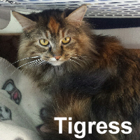Tigress was adopted from the Cat House and Adoption Center on Saturday, April 2, 2016.