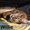 Willie was adopted from the Cat House and Adoption Center on Saturday, April 23, 2016.<br /> <br /> Willie<br /> <br /> Sweet William.<br /> <br /> Their worst fears came true - separated due to a stroke of his human mom. Loved and cherished, Willie looks for a new home where he can again be the focus of affection and get his belly rubbed and his chin scratched.