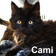 Cami was adopted from the Cat House and Adoption Center on Saturday, January 30, 2016.