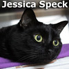 Jessica Speck was adopted from the Cat House and Adoption Center on Saturday, November 21, 2015.<br /> <br /> Jessica Speck<br /> <br /> Round little face, fantastic personality.<br /> <br /> This little charmer knows she's got it and is not afraid to flaunt it. Jessica seeks a mature new owner that can meet her every need, spoil her beyond her wildest dreams and love her for life. Is this you?