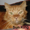 Sun King was adopted from the Cat House and Adoption Center on Saturday, May 28, 2016.