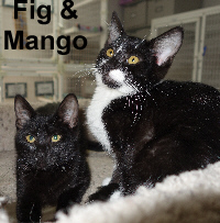 Fig and Mango (sisters) were adopted from the Cat House and Adoption Center on Saturday, July 2, 2016.