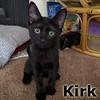 Kirk was adopted from the Cat House and Adoption Center on Saturday, August 13, 2016.<br /> <br /> Kirk<br /> <br /> The quintessential officer.<br /> <br /> His next mission is to find the way to your home and explore all the nooks and crannies and go where no cat has gone before. Picard would be a good fit to help with the adventuring.