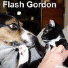 Flash Gordon was adopted by his foster home on Thursday, November 12, 2015.