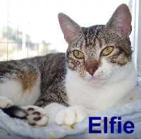 Elfie was adopted from the Cat House and Adoption Center on Saturday, February 27, 2016.
