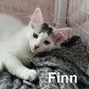 Finn was adopted from the Cat House and Adoption Center on Saturday, July 16, 2016.