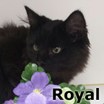 Royal was adopted from his foster home on Saturday August 20th, 2016.