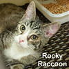Rocky Raccoon, Sgt. Pepper and Eleanor Rigby (from hoarder to happy) were adopted from the Cat House and Adoption Center on Saturday, April 16, 2016.