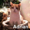Adrian was adopted from the Cat House and Adoption Center on Saturday, December 5, 2015.