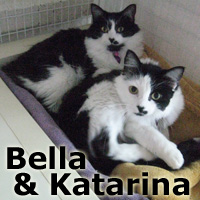 Katarina and Bella (sisters) were adopted from the Cat House and Adoption Center (third time is a charm) on Saturday, November 21, 2015.<br /> <br /> Katarina and Bella<br /> <br /> Sisterly love.<br /> <br /> Adopted and returned due to allergies, these two beautiful and bright eyed girls are full of charm. They're bonded and beautiful and yet uniquely different. Katarina and Bella will bring life to your home and warm you with their sweetness