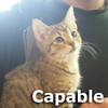 Capable was adopted from the Cat House and Adoption Center on Saturday, January 9, 2016.