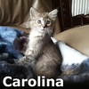 Carolina and Georgia were adopted together from the Cat House and Adoption Center on Saturday, August 13, 2016.<br /> <br /> Carolina<br /> <br /> Sweet Carolina, good times never seemed so good. Ready to play, and up for a snuggle, she has been waiting just for you.