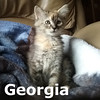 Carolina and Georgia were adopted together from the Cat House and Adoption Center on Saturday, August 13, 2016.<br /> <br /> Georgia<br /> <br /> She's got you on her mind. She will snuggle in for peaceful dreams, waiting for the road that leads to you.