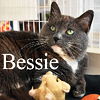 Bessie was adopted from the Cat House and Adoption Center on Saturday, September 10, 2016.<br /> <br /> Bessie<br /> <br /> Isn't she cute?!<br /> <br /> With a round face and cobby-body, you just want to cuddle this darling girl. She is eager to get what she wants and brave enough to say so. Bessie is all about causal living and doesn't buy into the trendy times. Want a great lap cat?