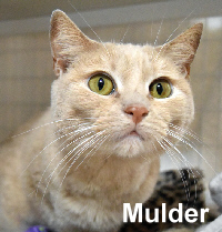 Mulder (a hoarder survivor) was adopted from the Cat House and Adoption Center on Friday, March 25, 2016.