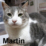 Martin was adopted from the Cat House and Adoption Center on Saturday, November 28, 2015.