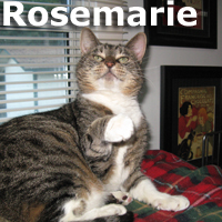 Rosemarie was adopted from the Cat House and Adoption Center on Saturday, December 19, 2015.<br /> <br /> <br /> Rosemarie<br /> <br /> Come a little closer dear.<br /> <br /> Her hearing difficulties do not stop her from her daily love and affection. This beautiful lady is quiet and unassuming and yet very grateful for her daily devotion from her human. Rosemarie really comes into her own when she doesn't have to share the spot light with all the younger cats.
