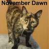 November Dawn was adopted from the Cat House and Adoption Center on Saturday, December 5, 2015.