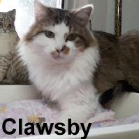 Clawsby was adopted from the Cat House and Adoption Center on Thursday, December 31, 2015!<br /> <br /> Clawsby<br /> <br /> Yes, there is a Santa Claws.<br /> <br /> No more cold lonely nights or fighting for what he considered his territory. Clawsby is such a sweet guy with a gentle disposition that wants nothing more than a home that lasts a life time. Do you have a home?