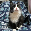 SuePurr and DanDee were adopted together from the Cat House and Adoption Center on Saturday, December 12, 2015.<br /> <br /> Dan Dee<br /> <br /> Dandy!<br /> <br /> While Dan and Sue have suffered a loss of family and home, they are grateful for love and affection. Sue is a bit more outgoing and Dan Dee is quite the gentleman to wait his turn for your hand.