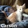 Carson was adopted from the Cat House and Adoption Center on Saturday, August 6, 2016. <br /> <br /> Carson<br /> <br /> Adventurous and inquisitive, Carson is ready to begin his expedition that leads to his forever home. Are you ready for him?