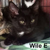 Wile E was adopted from the Cat House and Adoption Center on Saturday, April 9, 2016.