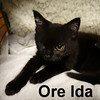 Ore-Ida was adopted from the Cat House and Adoption Center on Saturday, December 12, 2015.